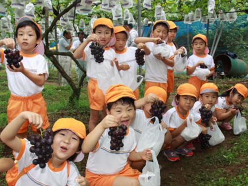 さつま町ぶどう収穫祭